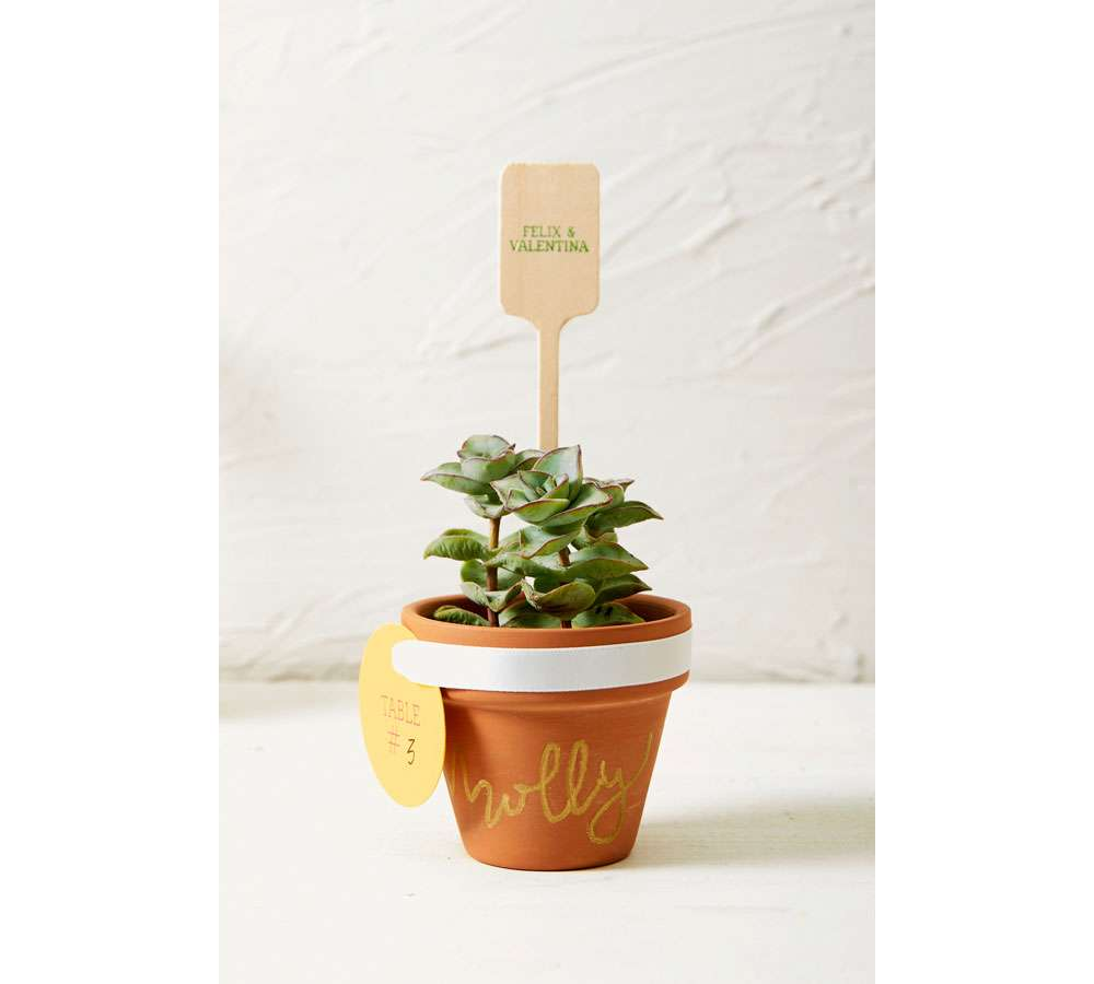 DIY Succulent Place Cards and Party Favors | For Your Party